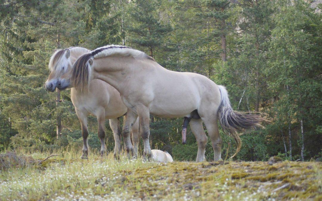 Medlemsmøte – Fôring av hest